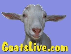Goats Live